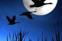 Ночные птицы