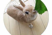 * maro ♡ / うさぎのマロちゃん  ミニウサギ/4月生まれ/メス  可愛い一瞬一瞬を載せていきますっ♡