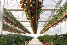 Hydroponic Aquaponic systems / by Shadrack Imai