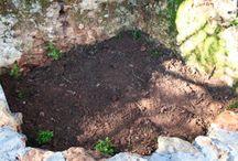 Homesteading & Gardening
