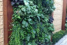 Green Walls / Stunning ways to beautify bare walls