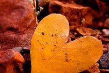 Heart, Coeur, in nature, une invitation à s'ouvir à nous-même... / L'énergie du coeur, l'énergie de la joie, de la passion, notre coeur la porte d'entrée à notre âme, intégrer notre âme, écouter notre coeur c'est écouter notre âme... écouter son intuition!:-)