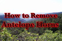 How to remove and clean game horns