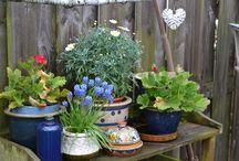 Tuin, plant en kruiden