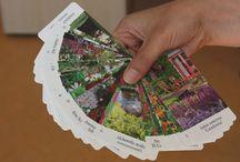Tuinieren: gemakkelijke planten