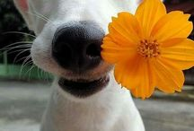 Dogs / Wonderful Dog pictures repinned from Pinterest users.