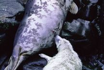 Seals / Seals / by Northern Ireland Environment Agency
