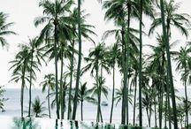 Take Me To The Tropics