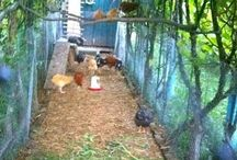 Homes for the hens