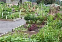 Ogrody, zieleń