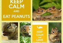 Love a chipmunk