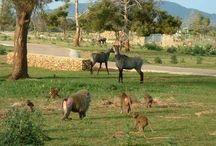 Theme Parks in Mallorca / Theme Parks in Mallorca Adventure Parks & Zoos