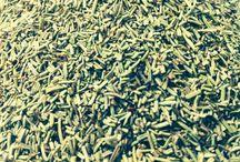 Erbe aromatiche - Aromatic herbs / Foto e descrizione dei prodotti www.toomaki.it