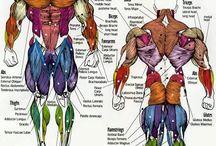 Anatomy. Ref
