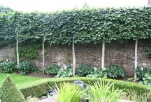 Pleached Trees / The art of preaching