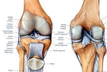 zona lutut