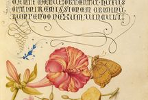 Botanical Illustrations / I've always been fascinated with botanical drawings / by Amanda Schmidt