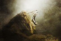Animal photo artistry