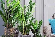 Flora | Indoor green