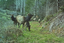 My Trail Camera Images