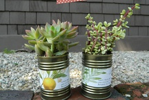 Garden - succulents in a can ;)