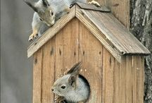 My Squirrel place / by Rosa Minerva Carles Galué