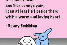 bunny budism