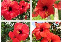 Colorfull flowers / Flores llenas de color de todas partes del mundo