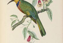 Planches ornithologiques