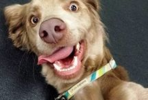 VOTE FOR US TO SAVE MORE LIVES! / Motley Zoo and our daycare, Rock Star Treatment, are in the running to win 1st place in #KING 5's Best of Western Washington's poll! We are slipping to 2nd, but with your help we can WIN- which means more animals saved! VOTE today- just once per category.