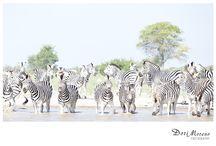 Botswana / by Dori Moreno