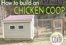Chickens / Raising and keeping chickens.