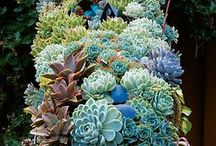 succulent obsession / and i do mean obsession....