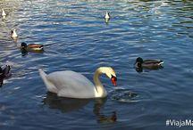 Parque de la Paloma, Benalmádena, Málaga. / El grandioso Parque de la Paloma puede ofrecerte una infinidad de opciones para disfrutar con familia o amigos. ¡Qué maravilla!