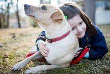 История спасения. Друзья, а у Вас доброе сердце? «Собаки - часть этого прекрасного мира».