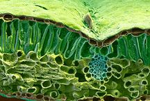 Mikroskopierkurs Botanik