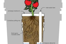 Sub-irrigated planters (SIPs)