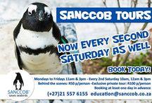 Sanccob Tours - Cape Town / Behind the scenes tour of the Sanccob facility! Bookings essential!!