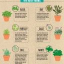 B`s HERB GARDENS Selection / a variety of Herbal Gardening to try