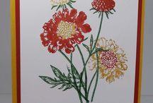 Field Flower cards