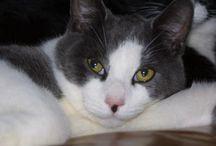 Kattennamen / Namen voor kittens en nieuwe katten, poezen en katers.