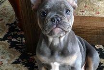 adorable dog's