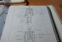My studies