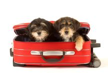 Pets on vacation  / Don't leave them at home!