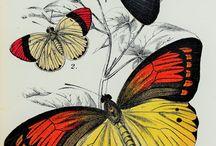 Danseden kelebekler