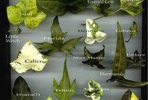 planten informatie