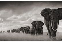 Black and white photography Africa
