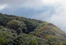Kiew Mae Pan / Kiew Mae Pan Nature Trail (Doi Inthanon National Park)