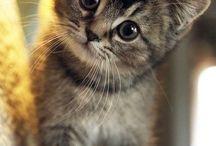 Twoje polubienia na Pintereście / (: