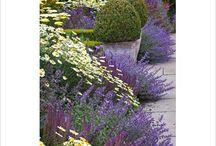 Garden...Good plant associations / by Carolynne Mason